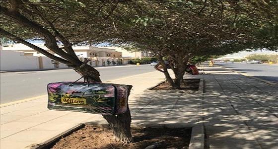 """مواطن يضع """" بطانيات """" على الأشجار لمساعدة الفقراء"""
