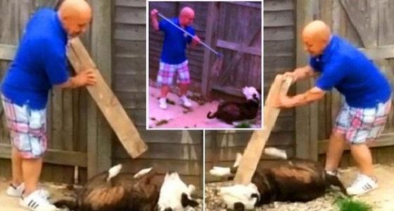 بالفيديو.. رجل يختلي بكلب ويعتدي عليه بطريقة وحشية