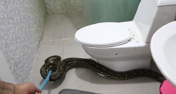فيديو مروع لسيدة تعثر على ثعبان ضخم داخل المرحاض