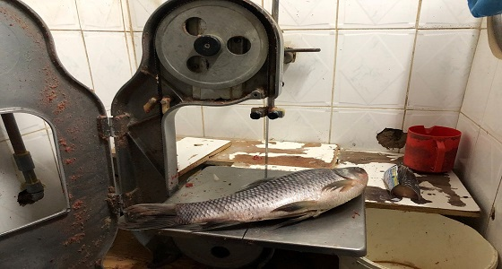 بالصور.. ضبط منزل شعبي يُستخدم في تقطيع اللحوم والأسماك