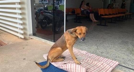 كلب ينتظر صاحبه المتوفي لمدة 4 أشهر أمام المستشفى