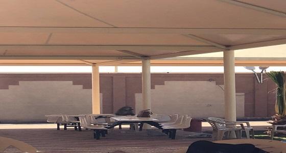 القرود تهزم السور الجديد بمبنى جامعة بيشة في بلقرن