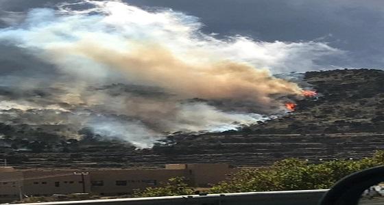 اندلاع حريق ضخم بأشجار العرعر في أبها