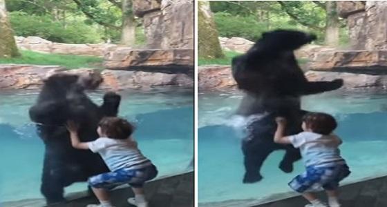 فيديو مذهل لدب يلهو مع طفل في حديقة حيوان