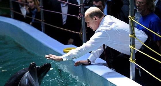 """علاقة الدلافين بقوى """" خارقة """" لأفراد الجيش الروسي!"""