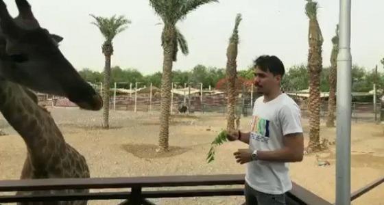 بالفيديو.. كارلوس إدواردو يغازل الزراف ويطعمها بفمه