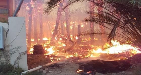 """"""" الدفاع المدني """" يُخمد حريقا في مزارع بدومة الجندل ويجري تحقيقات في الحادث"""