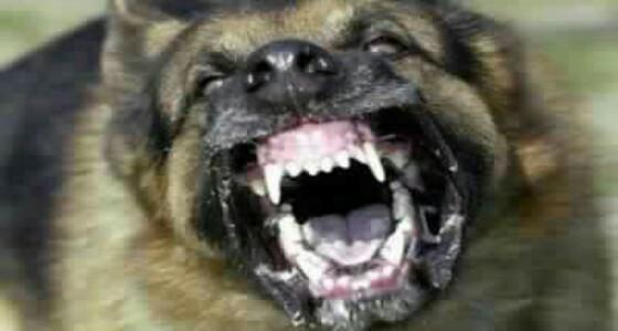 إصابة شاب بجروح بالغة إثر هجوم كلب مفترس عليه بمكة