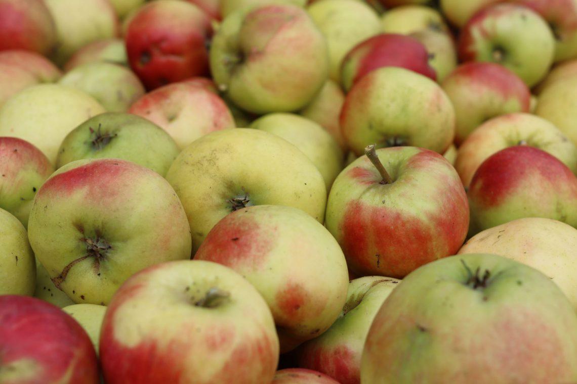 Frugthaven i Store Brøndum