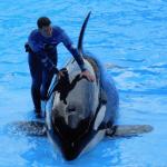 Orca & Trainer