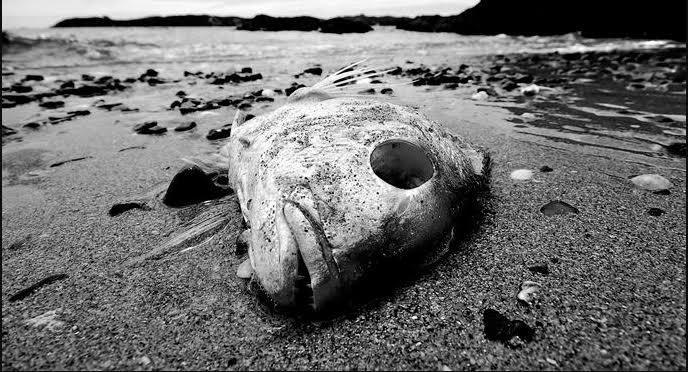 Dead Fish - Photo credit: Warren Carlton