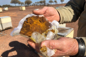 Silk Road to Hell - Queensland Beekeper uses supplement to feed bees during drought