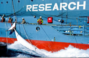 Whaling Vessel represented as research vessel