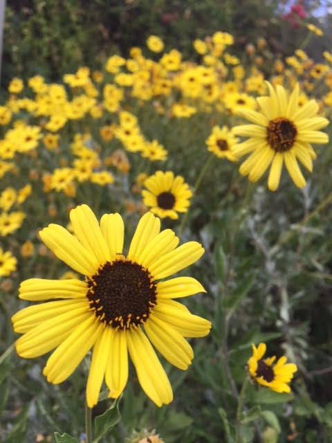 Fossil Fuel Pollution - pollinated flowers