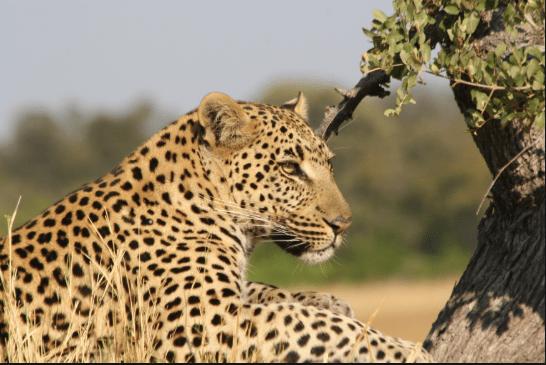 Climate - Cheetah