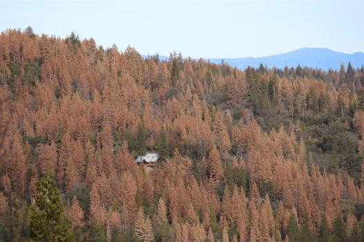 Climate Crisis - California Tree Graveyards