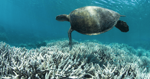 Climate Crisis - Sea Turtle in Reef
