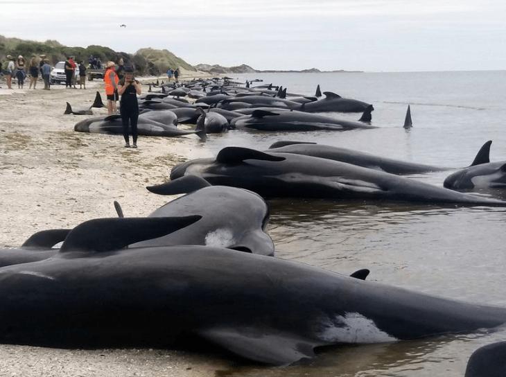 Dolphin Deaths