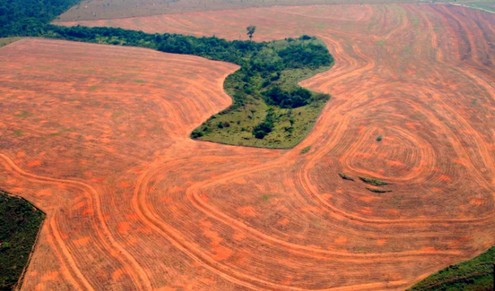 Fossil Fuels and Deforestation