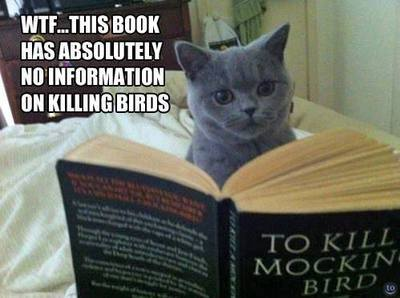 mockingbird-cat