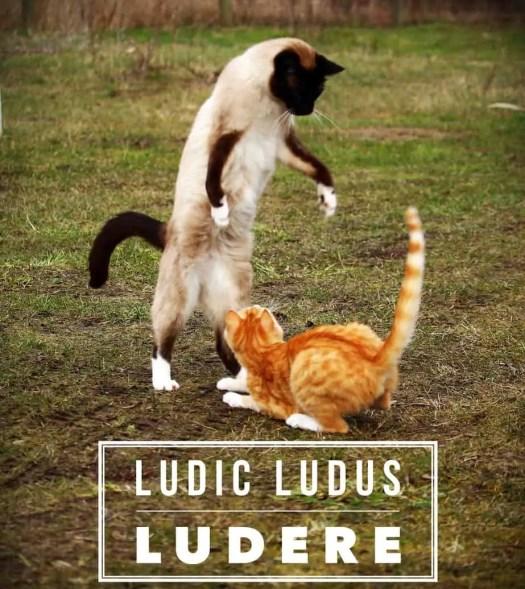 Ludic