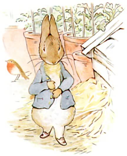 peter rabbit ate too much