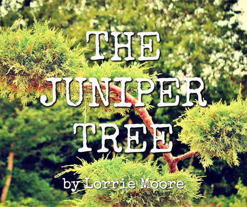 the juniper tree