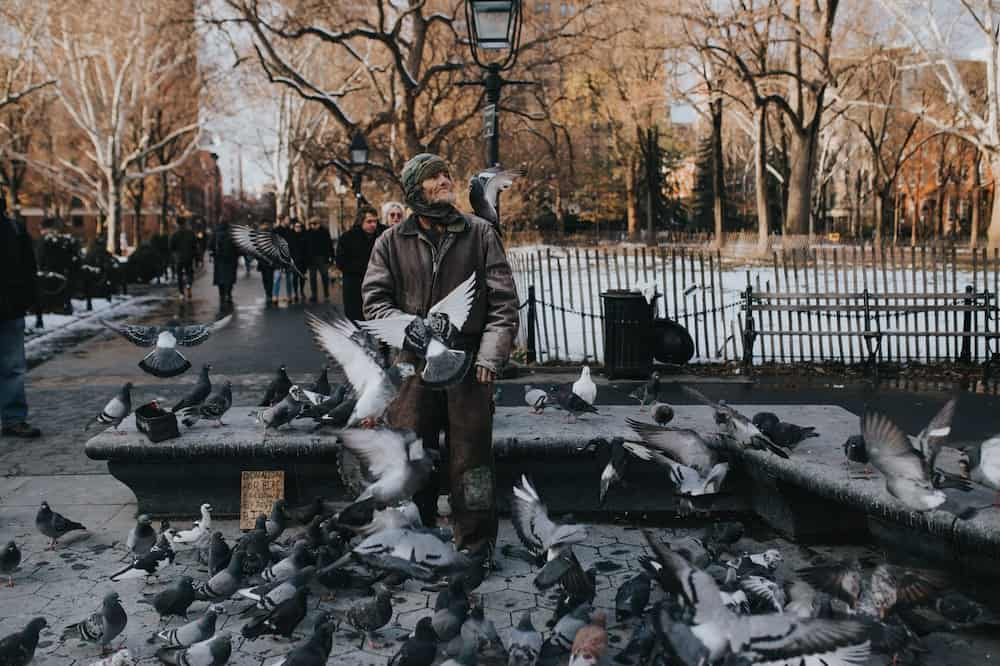 man surrounded by rock pigeons
