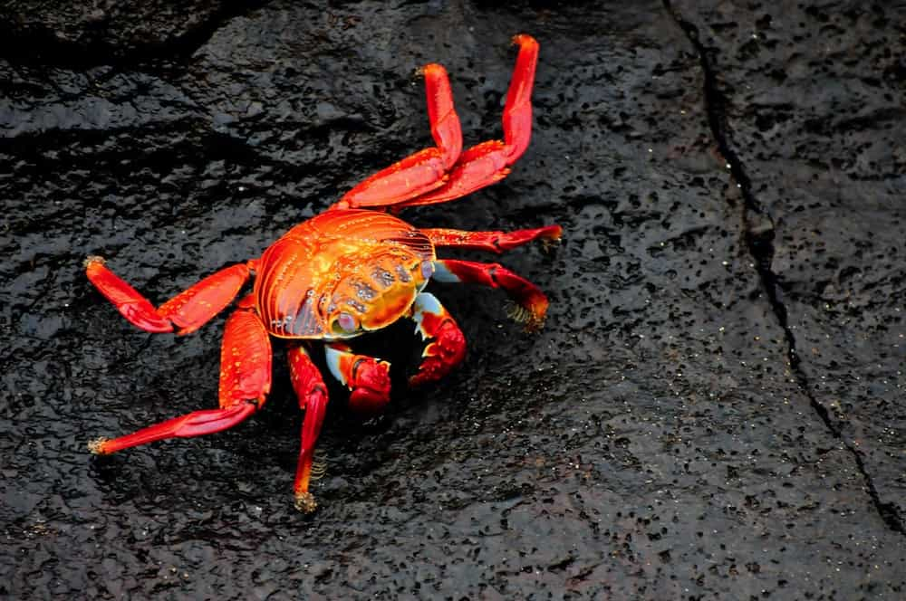 a crab walking on black cracked earth
