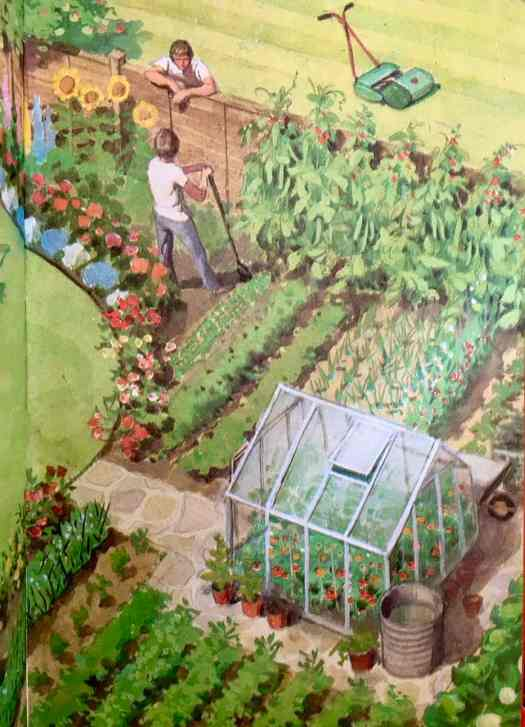 Garden illustration-for Ladybird by Harry Wingfield