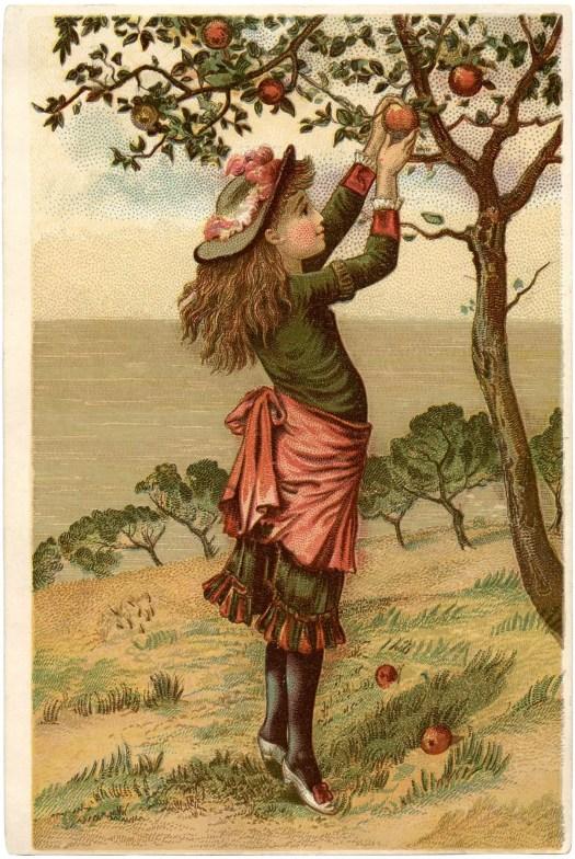 Vintage apple picking illustration, artist unknown