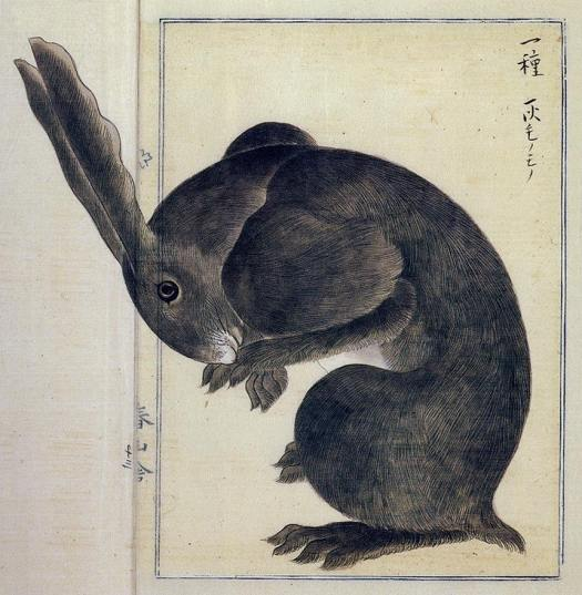 Takagi Haruyama, hare, Edo period,  1850's