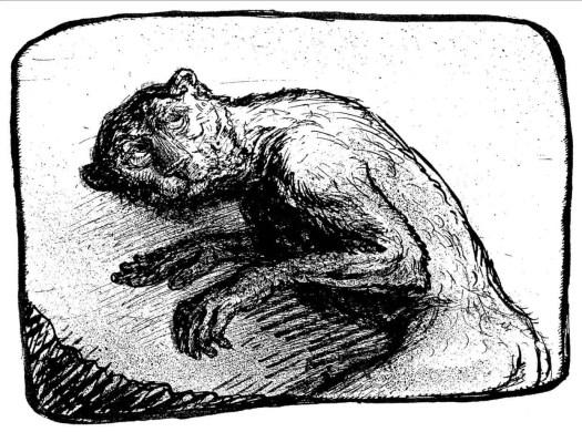 Der Katzenmensch (1930s) by Alfred Kubin Cat Man