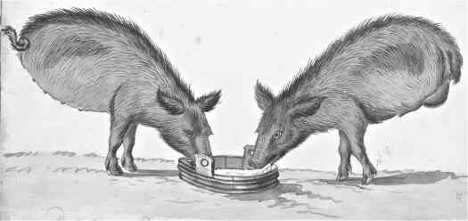 Pigs without hind legs near trough, Jan Brandes, 1785