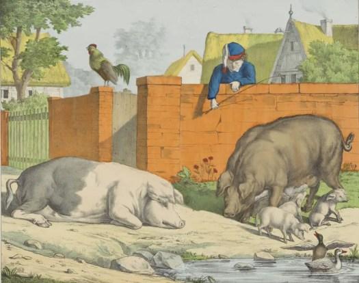 Porcs Pigs Zwijnen, firma Joseph Scholz, 1829 - 1880