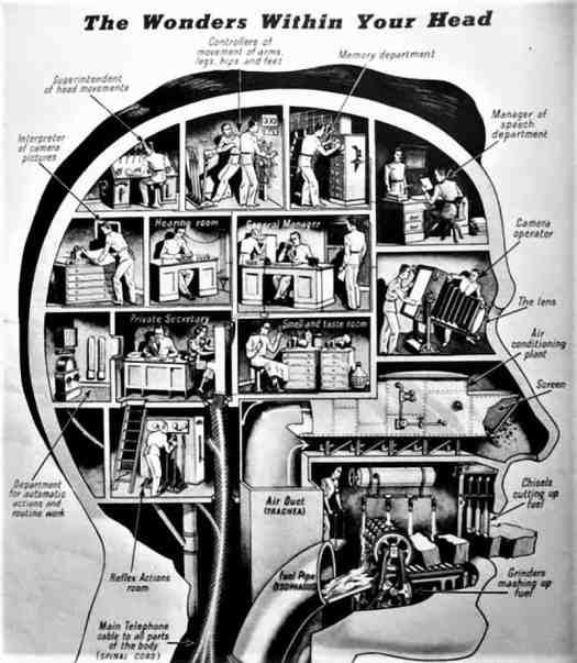 """From the December 6, 1938 of LOOK magazine """"The Wonders Within Your Head"""""""