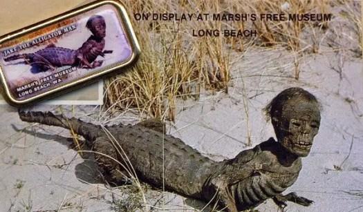 On display at Marsh's Free Museum Long Beach: Jake the Alligator Man (a chimera)