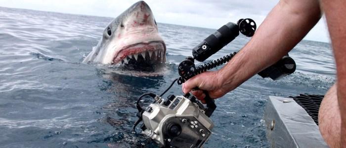 Andy Casagrande filming sharks 2