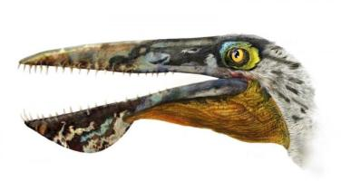 The head reconstruction of Ikrandraco avatar is shown in this illustration