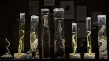 Specimens from Drafthouse Films' The Final Member. Courtesy of Drafthouse Films.