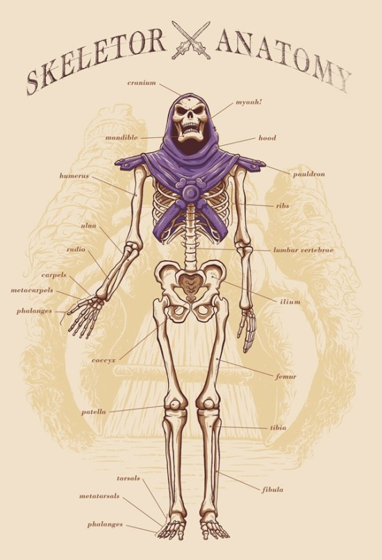 Adriano Alves – Skeletor Anatomy