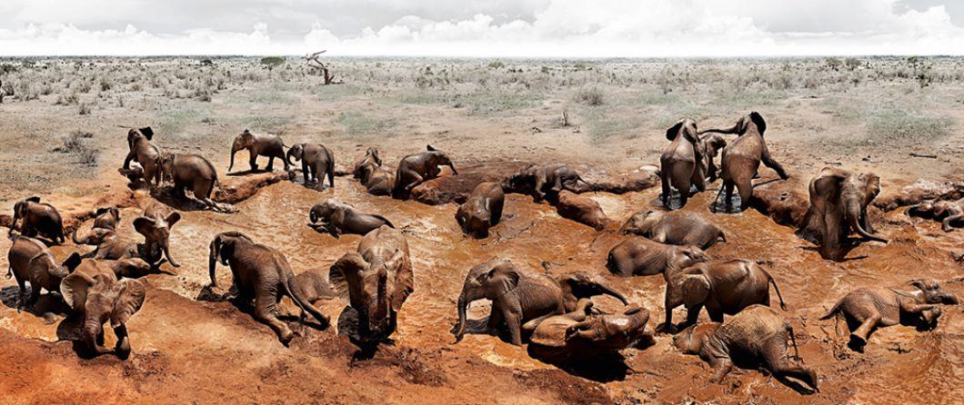 «Le David Sheldrick Wildlife Trust s'occupe des éléphants orphelins depuis plus de quarante ans. Il les élève avec tendresse et amour pendant huit à dix ans,avant de les relâcher dans la nature, où ils peuvent être libres et fonder une famille. À ce jour, le David Sheldrick Wildlife Trust a réussi à élever plus de 200 éléphants et à les réintégrer efficacement dans les troupeaux sauvages de Tsavo, revendiquant de nombreux bébés en bonne santé né d'anciens éléphants orphelins élevés par leurs soins.»