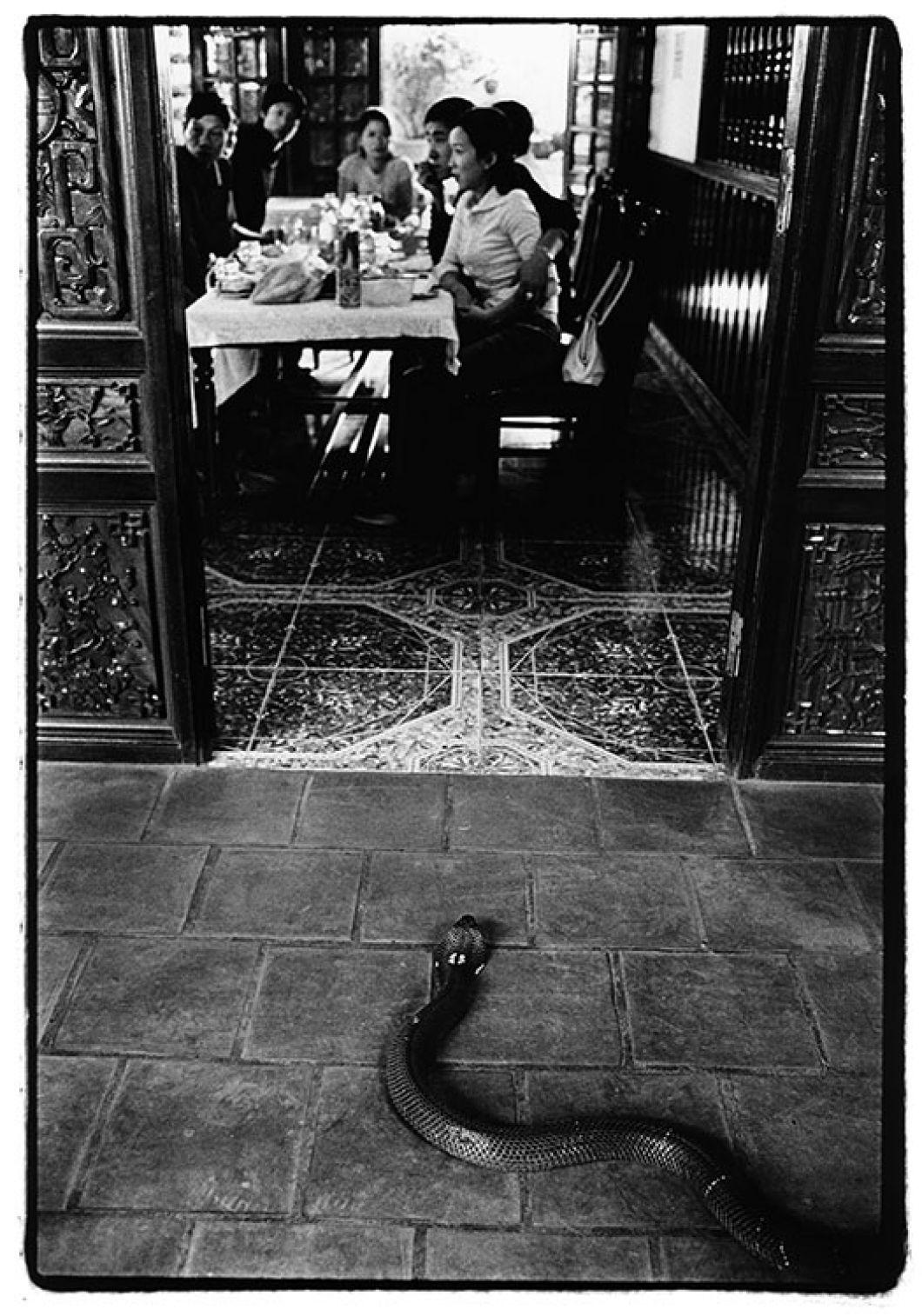 «On ne le voit pas mais à l'extérieur de l'image un homme excite les serpents pour les rendre agressifs. La famille attabléechoisit celui qu'elle veut manger. Lecœur, le sang et labile seront prélevés et consommés car la croyance populaire veut qu'ils augmentent la libido.»