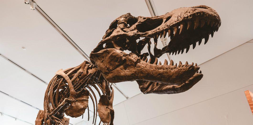 Les scientifiques ont réussi à créer un dinosaure en laboratoire. | Adam Muisevia Unsplash