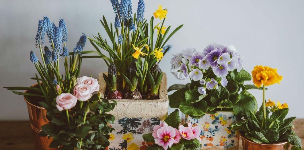 Il faudrait énormément de plantes pour qu'un effet positif se fasse ressentir. | Annie Spratt via Unsplash