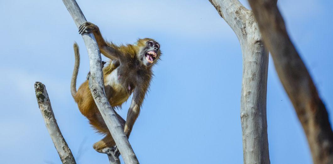 L'animal qui sommeille en nous se réveille au moindre bug de wifi. |Norbu Gyachung via Unsplash