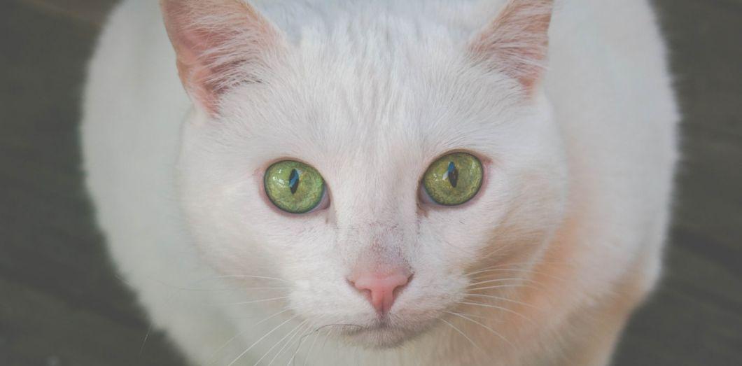 Les chats, de dangereux meurtriers, à l'origine de la mort de377 millions d'oiseaux et 649 millions de reptiles chaque année. | Jonnelle Yankovitch via Unsplash