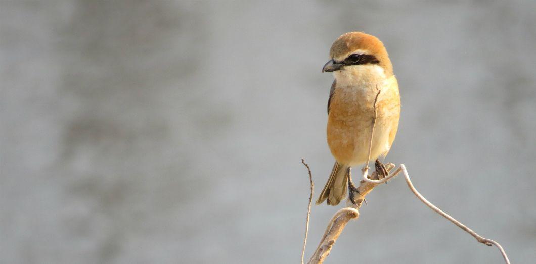 Les populations d'oiseaux sauvages diminuent pour de nombreuses raisons, mais les néonicotinoïdes ont un impact considérable. |Ryosuke Yamaguchivia Unsplash