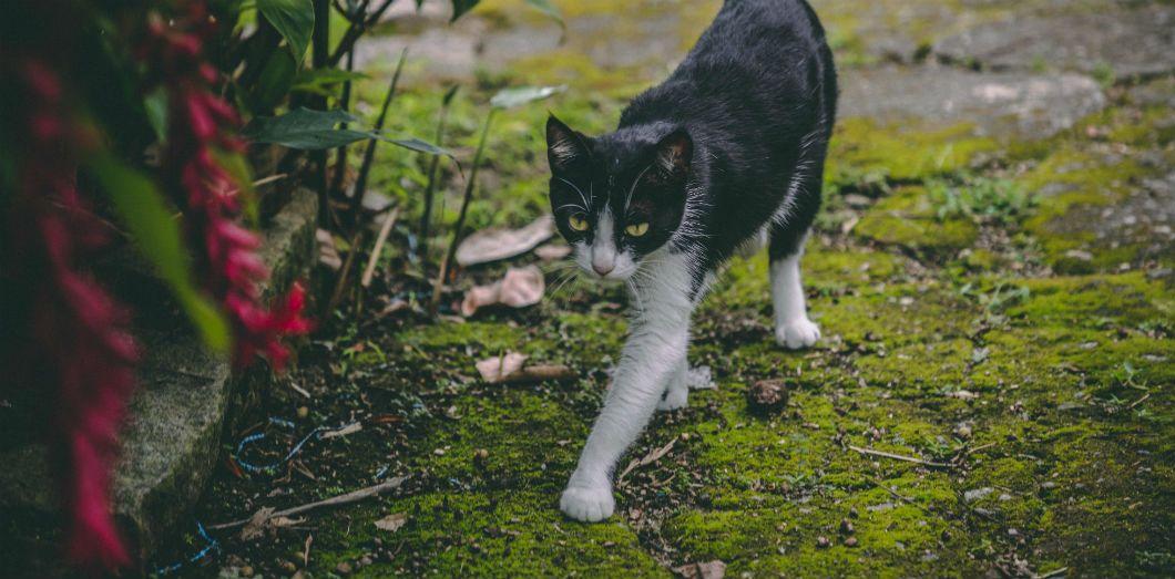 Aux États-Unis,Socks (chaussettes en français)fait partie des noms les plus donnés aux chats. | ViniLowRawvia Unsplash