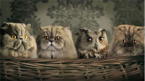 Кошки-и-Сова